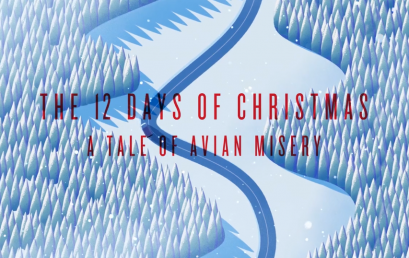 """The 12 Days of Christmas – A Tale of Avian Misery"""